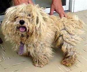 matted dog hair detangler