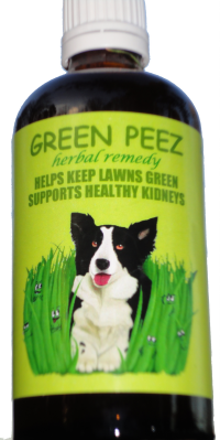 Is Celery Ok For Small Dogs