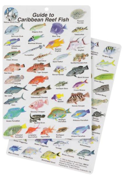 Guide to caribbean reef fish for Caribbean reef fish