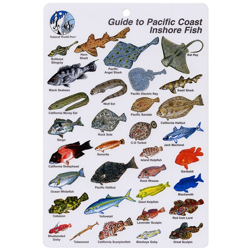 Guide to pacific coast inshore fish for California saltwater fish species