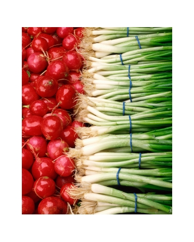 Spring onion rubber bands 1lb bags