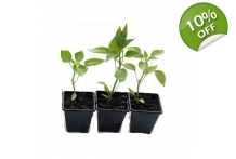 3 Plant Pack with feed