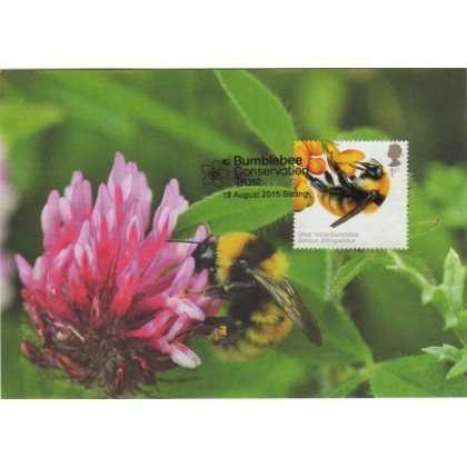 3738x2 British Bees 1st class Bumblebee Conservation maximum card