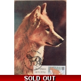 3777x5 Red Fox Maximum Card