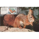 3778x5 Red Squirrel Maximum Card
