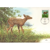 US04 Fawn maximum card