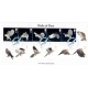 2327 Birds of Prey Norvic First Da..