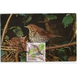 3954mx1 Songthrush maximum card 2017