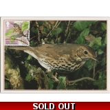 3954mx2 Songthrush maximum card 2017