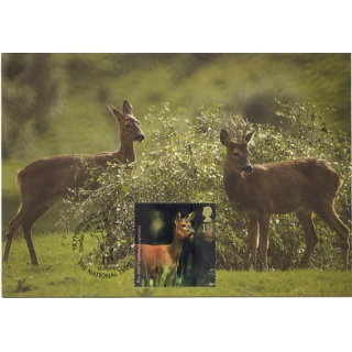 2480 Woodland Animals R..
