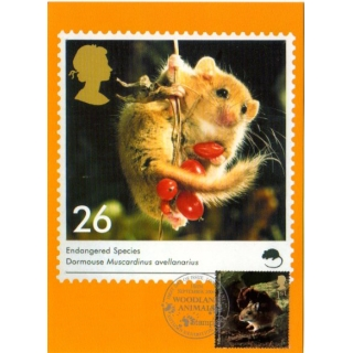 2482 Woodland Animals Y..