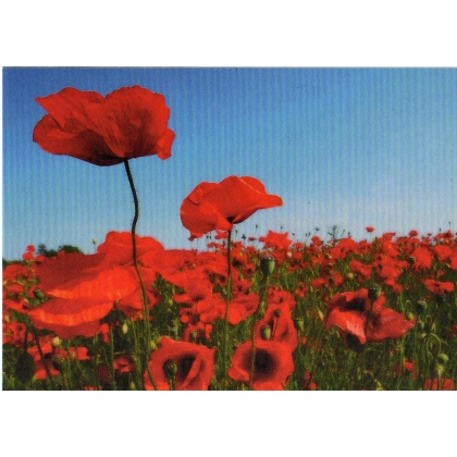 DR02 Poppy field postcard -  - discount for more than 2