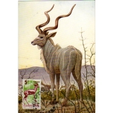 M478 Tangier Kudu maximum card - Teleg..