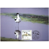 2769 Avocet bird maxi-card 2007