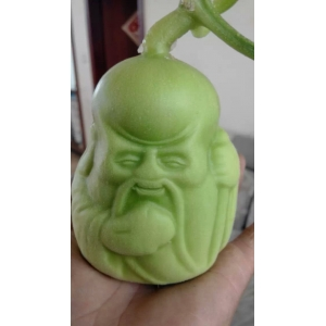 old man shaped sweet melon