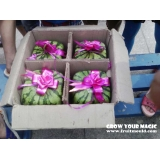 square watermelon packed and sold well..