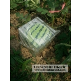 square watermelon growing on square sh..
