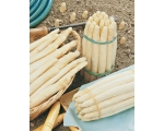 WHITE VENETIAN ASPARAGUS UK Only