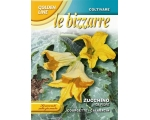 LE BIZZARRE - COURGETTE D..