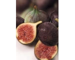 BLACK FIG BROGIOTTO