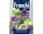 COBEA SCANDENS CLIMBING MIX *pre-order now for ..