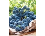 CONCORDE GRAPE / UVA FRAGOLA UK only