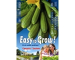 EASY COURGETTE