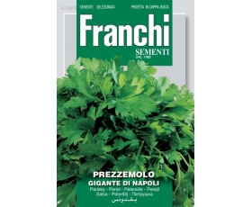 PARSLEY GIGANTE NAPOLETANO