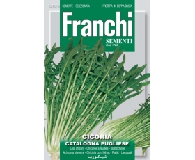 CHICORY CATALOGNA OF PUGLIESE