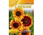 SUNFLOWER ORNAMENTALE MULTICOLOR