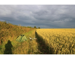 Selfie shadow with my tent in the corn field. Somerset. England. Box Canvas Print.
