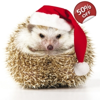 Christmas Hedgehog