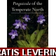 Pinguicula of the Temperate North