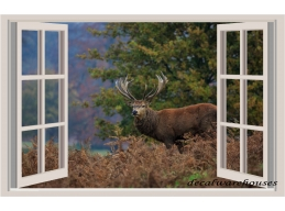 Deer & Window View Repo..
