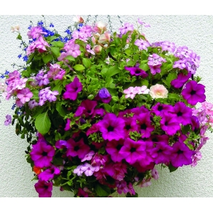 "TWO 12"" Easy Fill Hanging Baskets"