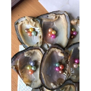 4 Pearl Oyster