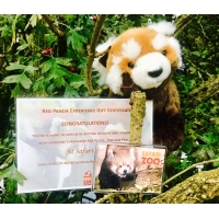 Meet the Red Pandas - Red Panda Experience Gift ..