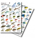 Fishes of Baja California