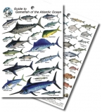 Guide to Game Fish of the Atlantic Ocean