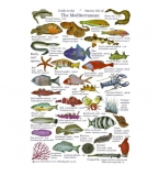 Guide to the Marine Life of the Mediterranean