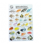Guide to Reef Fish of M..