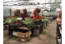SHRUBS/WINTER HANGING BASKETS/PUMPKINS/LOGS/STICKS/COAL/GAS ETC