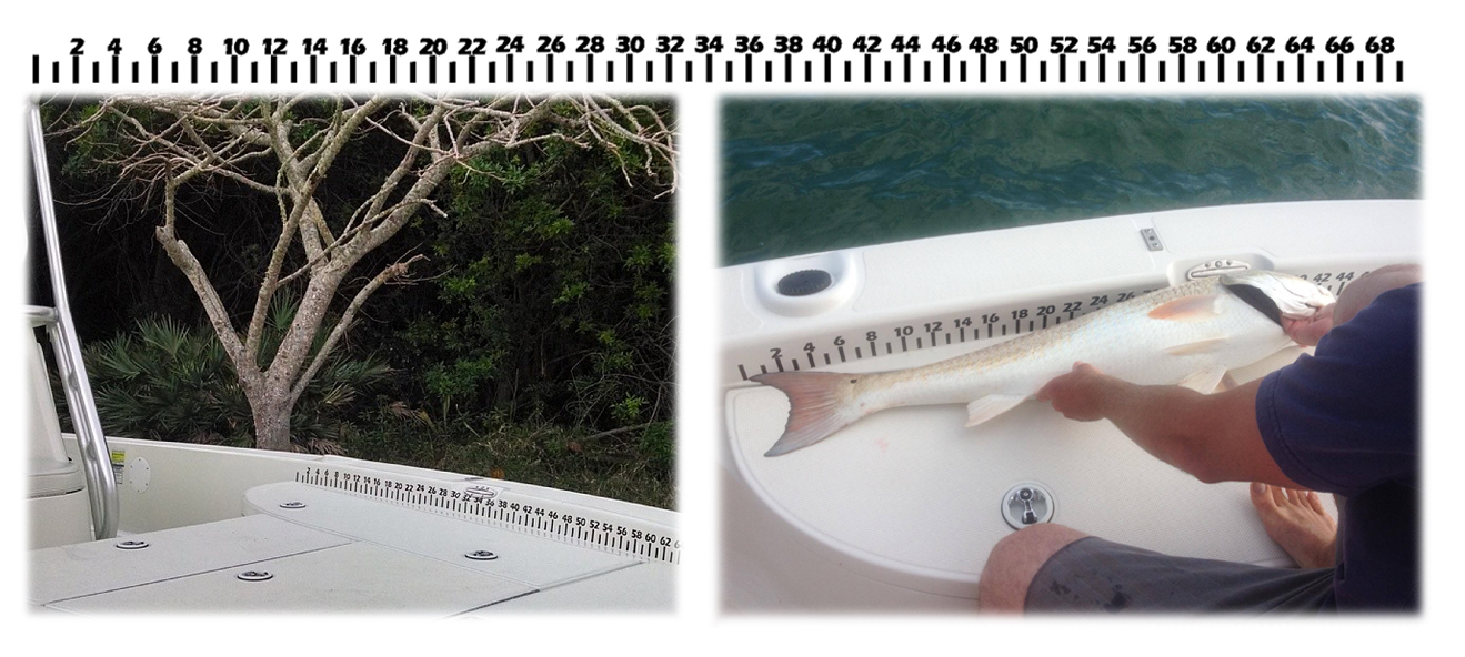 The stud ruler measuring tape 69 vinyl sticker for Fish measuring tape