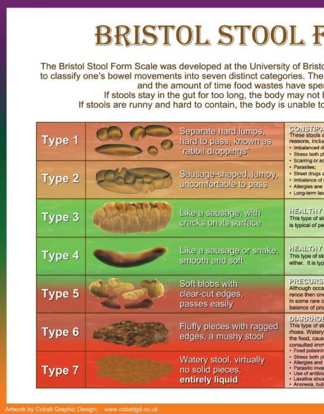 A Unique Visual Tool Bristol Stool Scale Poster Serves As An