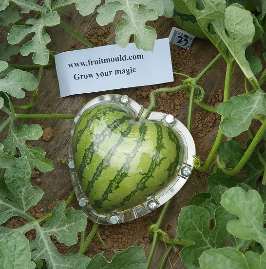 Square Watermelons And Apples Heart Or: Heart Shaped Watermelon Mold Kit
