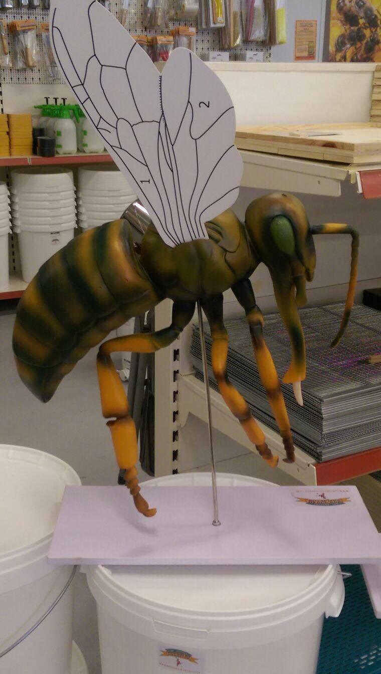 Bee Anatomy Model