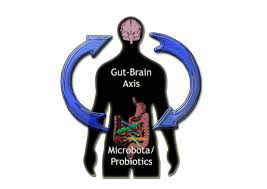 The Connection Between the Brain and the Gut
