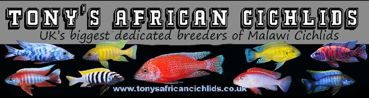 Tony's African Cichlids