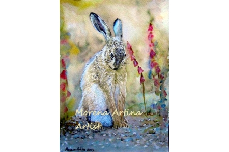 Shy Hare Canvas Print