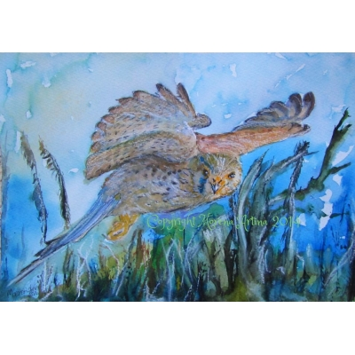 Kestrel at Midnight Print